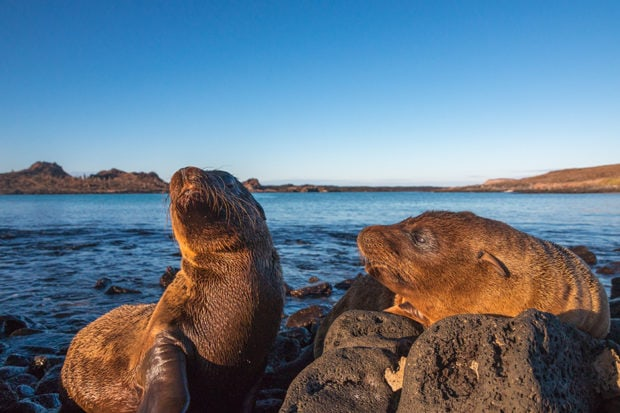 Sea lions in the Galápagos. Courtesy Indagare