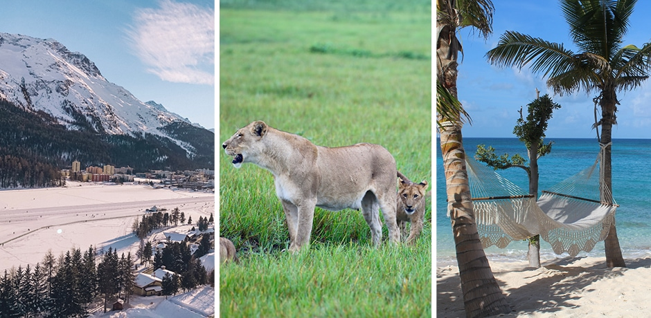 A view of the Engadin Valley, Switzerland; lions in Botswana; a hammock on Necker Island. Photos courtesy Indagare