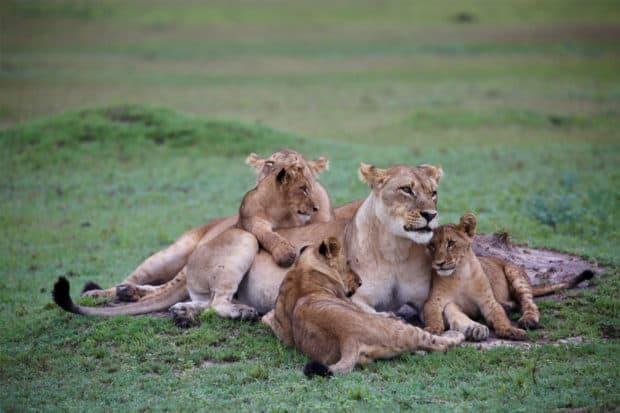 On safari in Botswana. Photo by Indagare's Rose Allen.