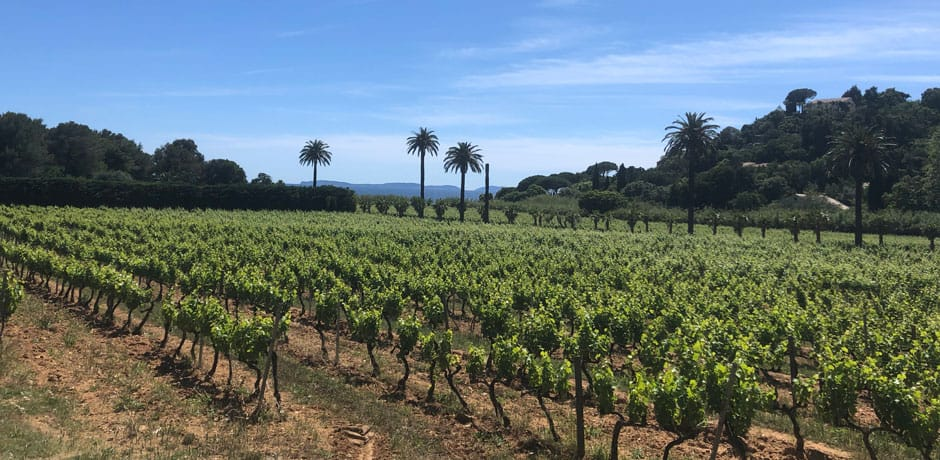 A vineyard in Aix-en-Provence, France