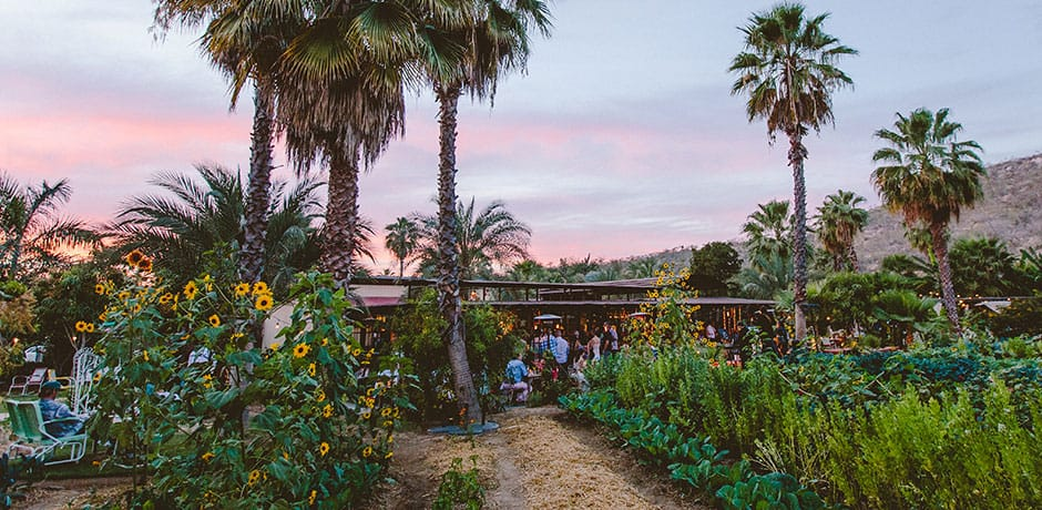 Sunset at Flora Farms in Cabo San Lucas, Mexico