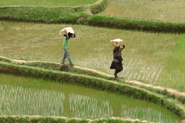 Locals in a field