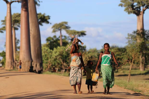 Women and baobab trees in Madagascar