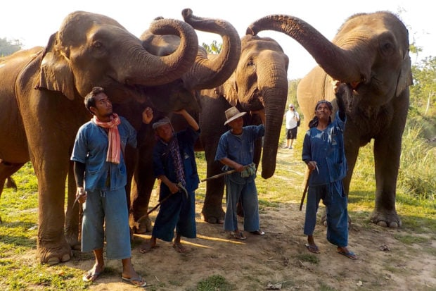Elephants and their mahouts at the Golden Triangle Asian Elephant Foundation at Four Seasons Tented Camp in Chiang Rai, Thailand.