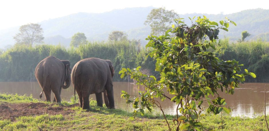 For the Love of Elephants: What to Know About Responsible Elephant Tourism