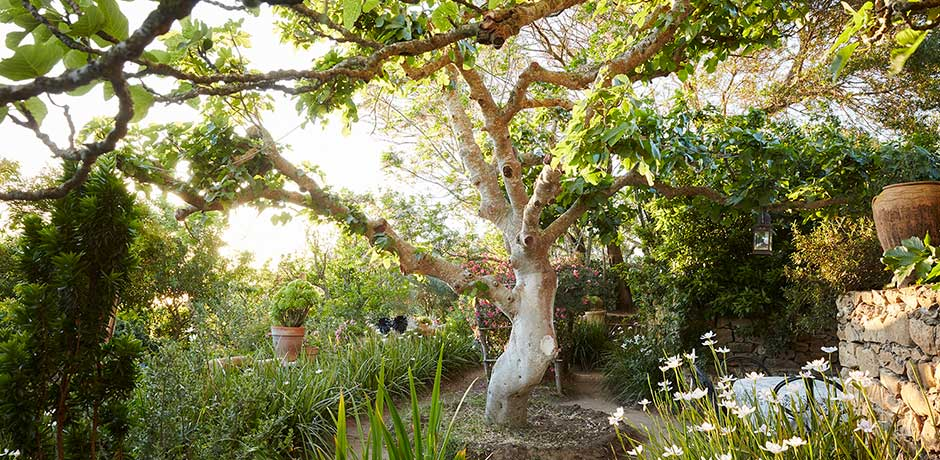 The gardens of Rohuna have more than 300 endemic species, including fig and acacia trees. Photo by Ngoc Minh Ngo