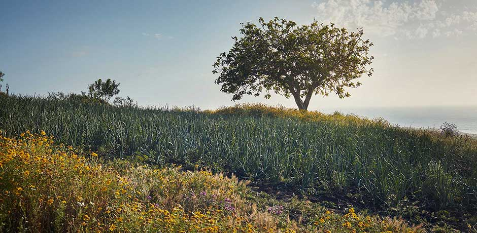 A field of irises at Rohuna. Photo by Ngoc Minh Ngo
