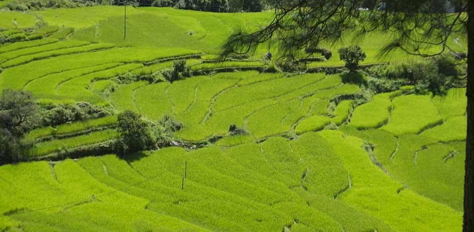 Bhutan's Gangtey Valley, Courtesy Melissa Biggs Bradley