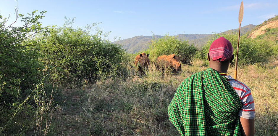 Spotting rhinos on a morning bush walk with a Samburu guide in northern Kenya