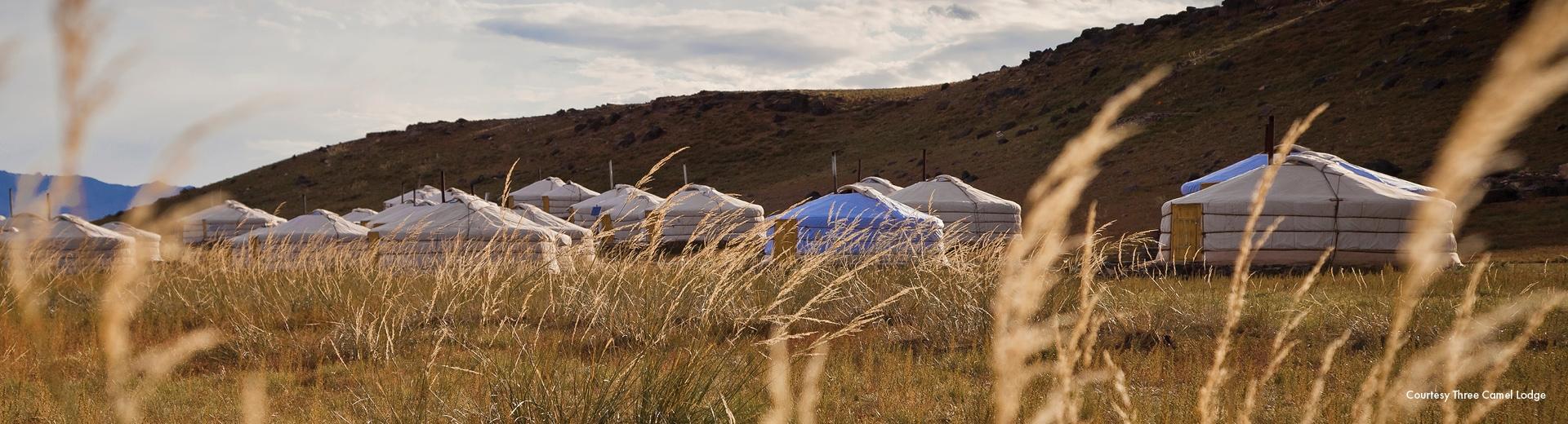 wild mongolia insider journey