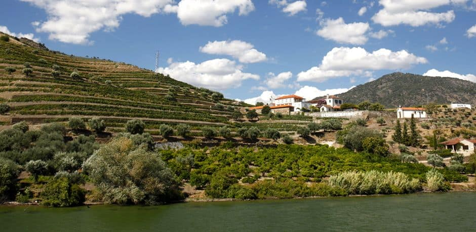 Near the Spanish border, terraced vineyards line both sides of the Douro. Photo courtesy of Miguel Ribeiro Fernandes/Alexandre Vaz.