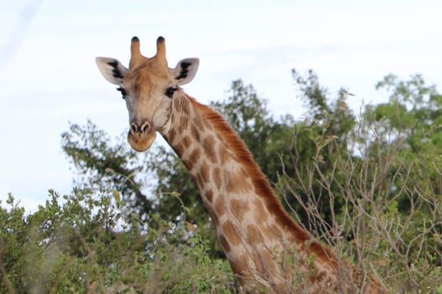 Member Slideshow: Safari in Botswana