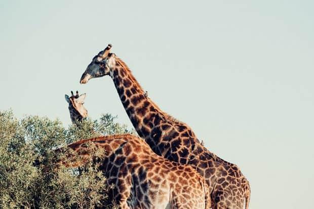Botswana-Unsplash-cara-fuller-2898901