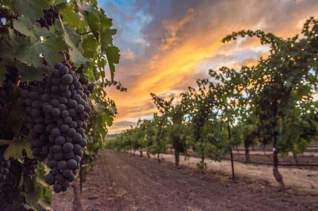 Sunset at a vineyard in Napa Valley, courtesy Visit Napa Valley