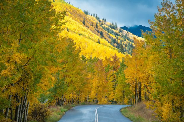Road surrounded by yellow-leaved trees on hillside in Apsen Colorado