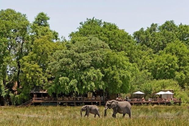 Courtesy Sanctuary Chief's Camp, Botswana