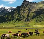 iceland horses hiking