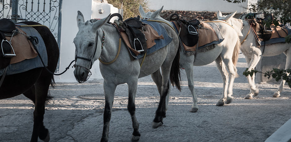 Donkeys carry goods through the streets of Oia