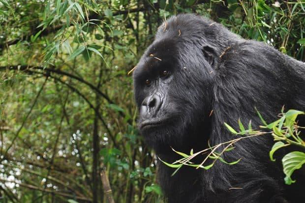 Mag-Slideshow-Rwanda-Uganda-Melissa-03DSC_44091