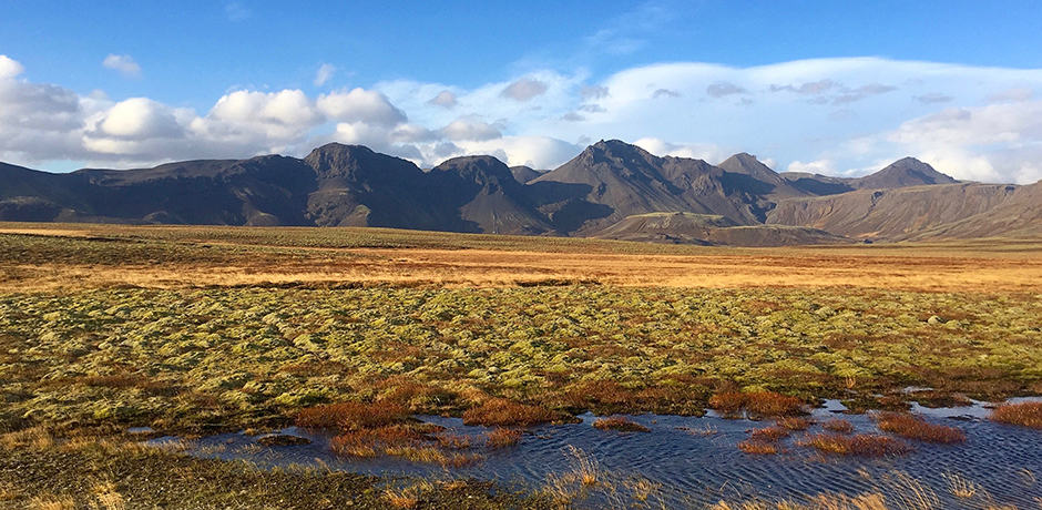 The lava landscape topped with moss, of which there are 230 different species in Iceland.