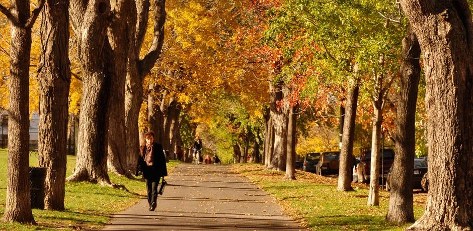 Parc La Fontaine, Courtesy Ville de Montréal