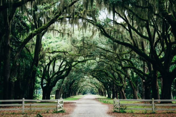 Savannah, Georgia, Courtesy Ashley Knedler