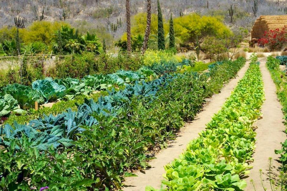 Flora And Fauna Garden at Flora's Farm , Los Cabos, Mexico