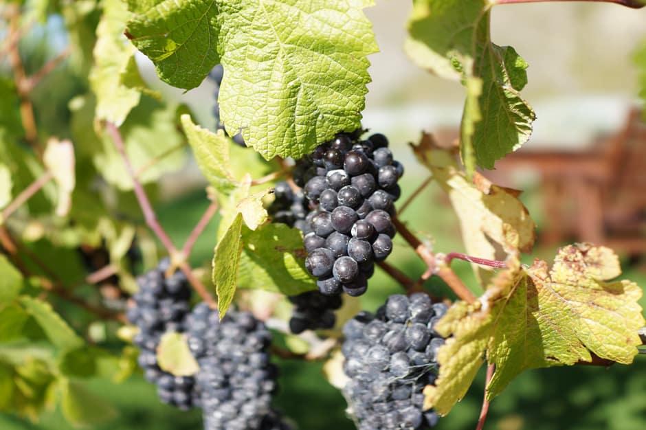 Gibbston Wine Region