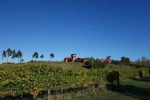 Marlborough Winery Tour