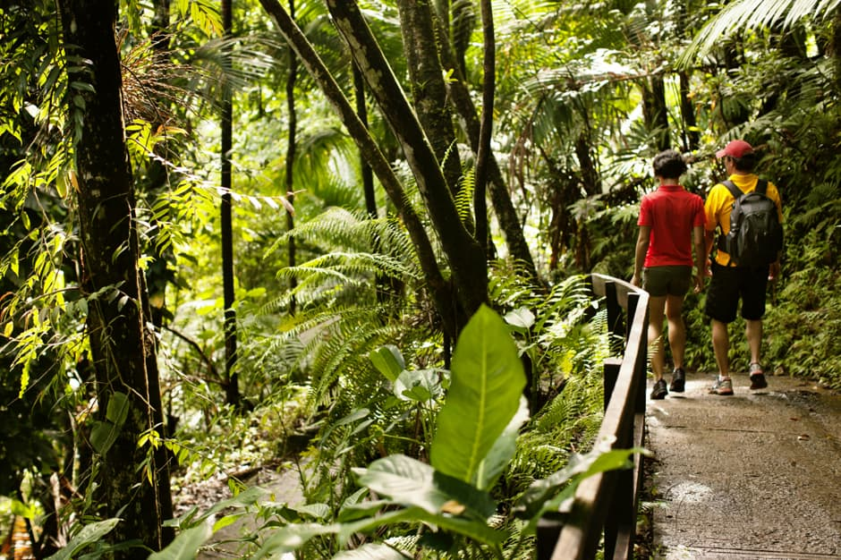 Indagare Tour: Hiking in the Rainforest