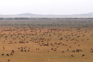 Seasonal Mobile Camps: Serengeti National Park